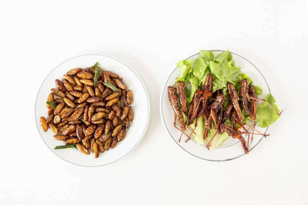 Fried insects on two white plates
