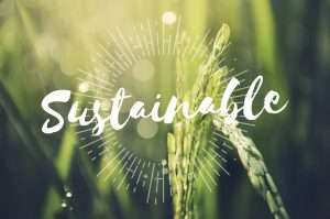 Sustainability in food supply chains